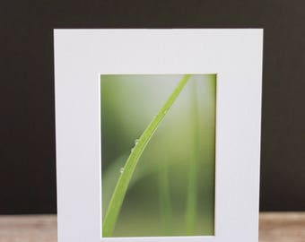 Fine Art Macro 5x7 Matted Photo - Morning Dew