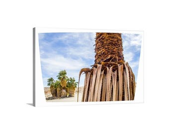 Anza Borrego, Palm Springs Print, Southern California, Desert Picture, Palm Trees, Mojave, Palm Springs Art, Ready to Hang, Canvas Wall Art