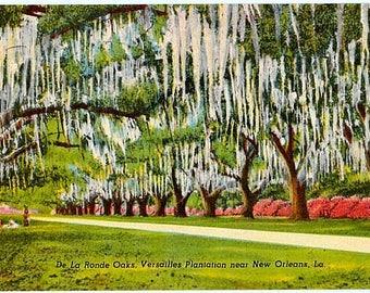 Vintage New Orleans Postcard -  The De La Ronde Oaks (Unused)