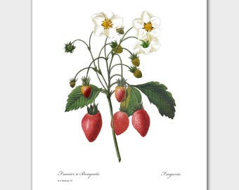 Farmhouse Chic Wall Decor (Wild Strawberry Print, Fruit Art) -- Pierre Redoute