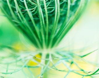 Wild Flower Digital Download, Printable Decor, Vertical Wildflower Art, Wildflower Photo, Office Wall Art, Printable Photo, Flower Clipart