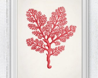 Red seaweed - Sea plant in red- Beach house decor, sea life print, science illustration, A4 print, Biology study, Red wall decor SPC098