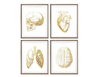 Gold Anatomy Print Set, Science Poster, Anatomy Poster, Foil Medical Art, Human Body, Doctor Gift Med School, Faux Gold Foil, Heart, Lungs