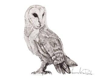 Barn owl, limited edition A4 gicleé print