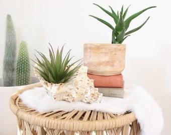 Real Seashell Conch Shell Airplant Holder Boho Home Decor