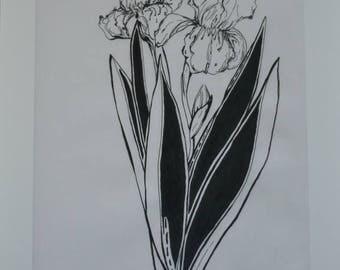 Dutch Iris #1