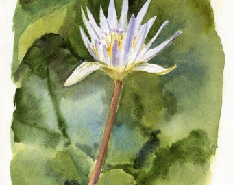 6x8 - Water Lily - Original Watercolor Painting