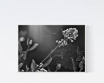 5x7 meadow print - Botanical prints - black and white photography - dark artwork, wall art decor, living room art, bedroom, flowers print