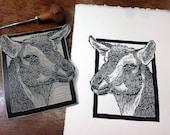Nigerian Dwarf Goat Dairy...