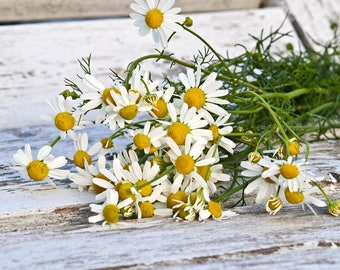 Chamomile extract, for hair,skin,mouth, toner without alcohol
