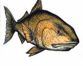 "8"" Redfish Decal sticker"