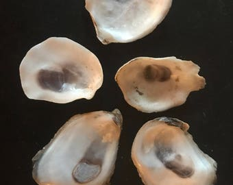 10 Very Small Oyster Shells 1-1.5 Inches from Cape Cod  Hand Picked Sun Dried White and Purple for Crafting Wreaths Jewelry