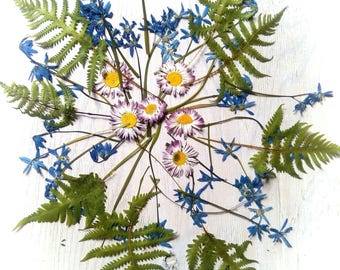 Pressed flowers for craft, natural botanical supplies