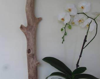 """37"""" Thick & Large Driftwood Tree Limb - Driftwood Lamp Base - Drift Wood Wall Art"""