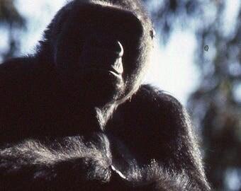 Vintage 35mm Photo Slide Abstract Shadow Gorilla