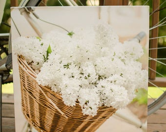Beautiful White Lilacs in Bicycle basket photo on Canvas