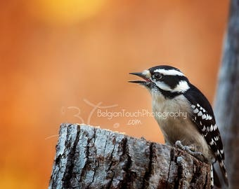 WOODPECKER-DOWNY WOODPECKER image-Nature Photography-Bird photography-Woodpecker art-Woodpecker gift-Woodpecker image-Woodpecker on tree
