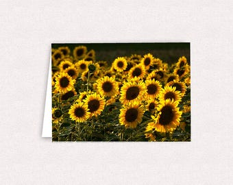 Sunflower Field Photo Note Cards 5x7 Greeting Card Blank inside with envelopes Sunflower Pictures Stationary Sunflowers Fields of Flowers
