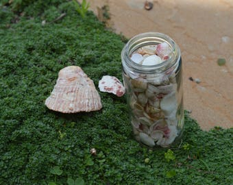 Jar of Clam/Scallop Shells