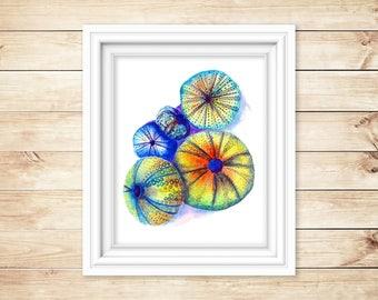 Sea Urchins #1 Watercolor Print