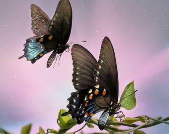 Tandem butterflies in twilight