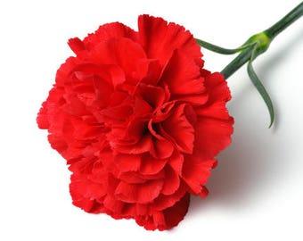 Carnation Floral Wax