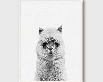 Alpaca, Alpaca Print, Nursery Animal Wall Art, Animal Portrait, Animal Photo Print, Kids Animal Art, Animal Decor, Peekaboo Decor