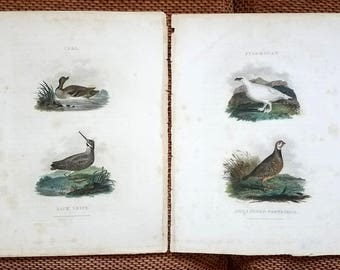 Two antique copperplate engravings - from Rural Sports (1802) - Partridge Teal Snipe Ptarmagan