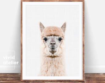 Alpaca Print, Baby Animal Prints for Nursery, Nursery Wall Art, Nursery Decor, Printable Art, Farm Animal Print, Kids Wall Art Poster, Photo