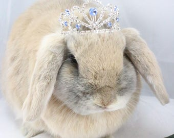 Rhinestone Tiara / Blue Tiara for rabbits, dogs and small pets