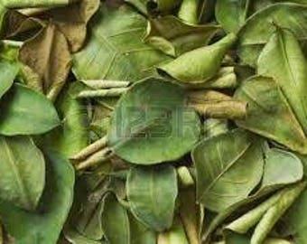 Organic Kaffir Lime Leaves Leaves