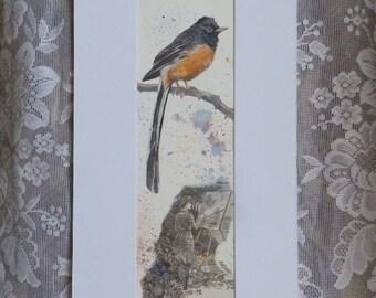 Bird Painting, bird art, gift for birder, White-rumped Shama, original painting