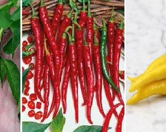Cayenne chilli-hot (purple,red or yellow)
