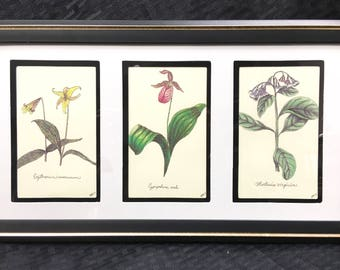 Spring Wildflowers Framed Botanical Print Set