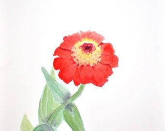 Red Zinnia Study; Original Watercolor Painting, 8x10