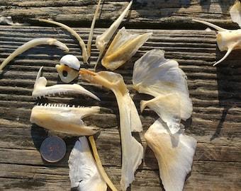 90 Plus Assorted Fish Bones