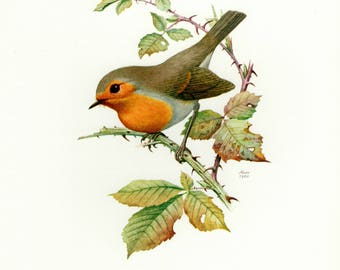 Vintage lithograph of the European robin from 1960