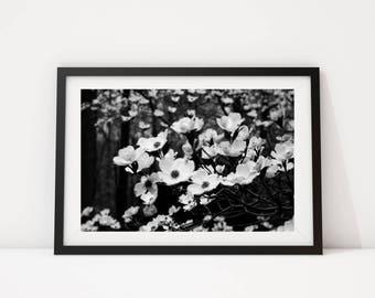 Black and White Photo, Black and White Wall Art, Printable, Printable Art, Instant Digital Download, Flower Print, Flower Photo, Flower Art
