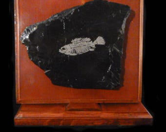 Laser Etched Fossil on Slate