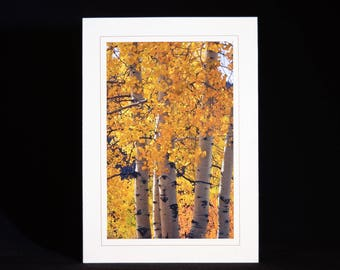 Photo Cards, Customized Cards, Note Cards, Nature Note Cards, Color Note Cards, Blank Note Cards, Color Note Cards, Hand Made Note Cards,