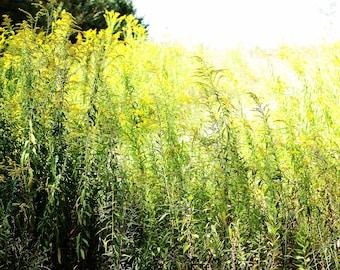 Grass. Photography. Green.