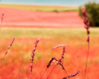 "Fine Art Photography, Red, Lawn, Bokeh, Summer, Wall Art, Fine Art Print,  Wall Decor, Art Decor - ""Red Lawn Abstract"""