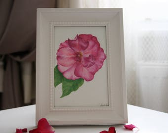 Original Watercolor Pink Rose