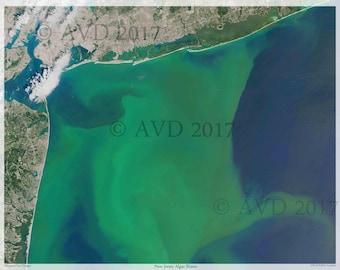 New Jersey Algae Digital Print