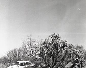 desert punch buggy by hilary kathleen unsigned