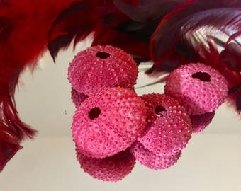 Bright Red Sea Urchin (4) Home Decor or Floral Arrangement