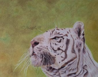White tiger - realistic animal portrait made by MagLM with colored pencils