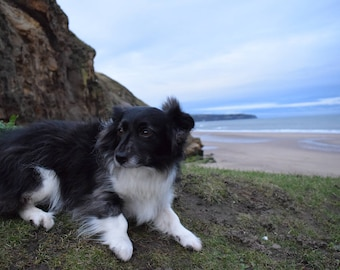 Daisy Doo the family dog is a natural poser.  Here she is reposing with my favorite local spot - Sandsend in the background.