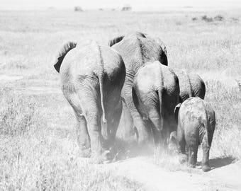 Limited edition fine art wildlife photography print: 'On Their Way'