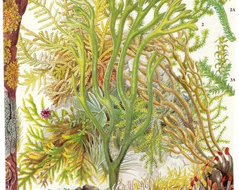 Limited edition giclée print of original collage 'One; Character Studies in Plant Life'